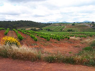 vin languedoc saint chinian